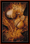 Acorns cross stitch pattern